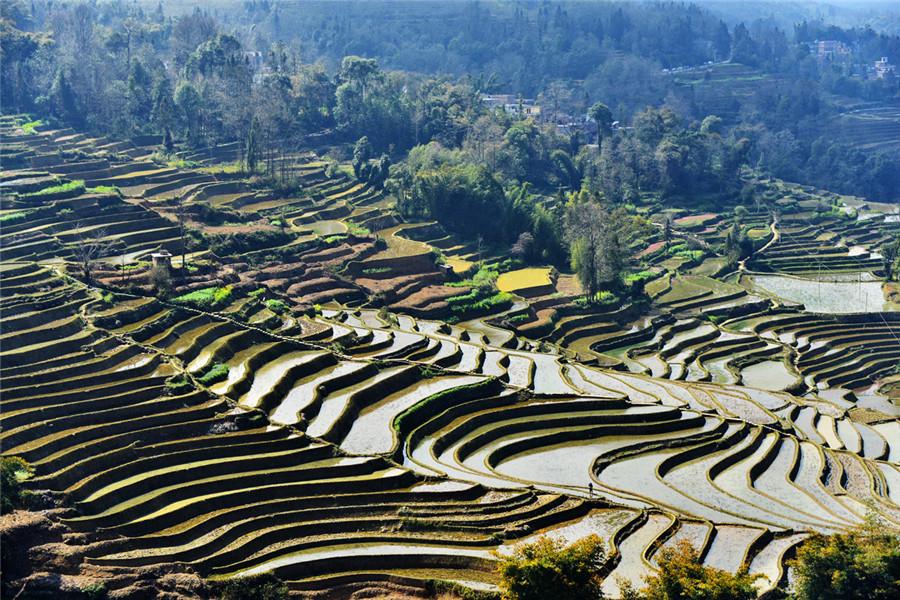 Bada Rice Terraces in Yuanyang County, Honghe