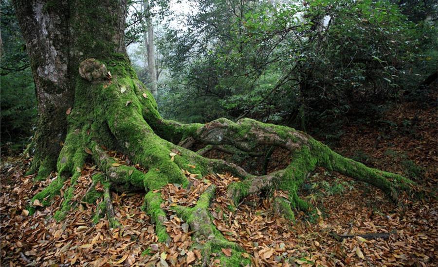 Tongluoba National Forest Park in Shuifu County, Zhaotong