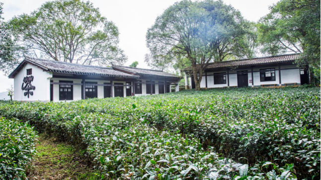 Puer Tea Making Class and Workshop of China Puer Tea Exhibition Garden in Puer City