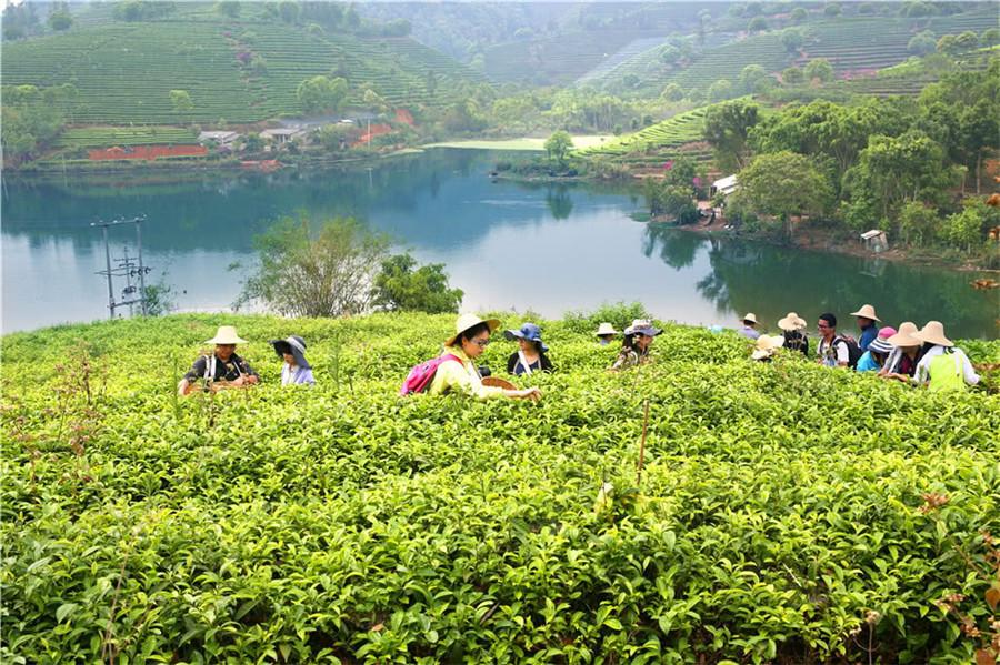 Yinsheng Tea Manor in Puer