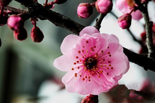 Plum flowers in Kunming Heilongtan Park