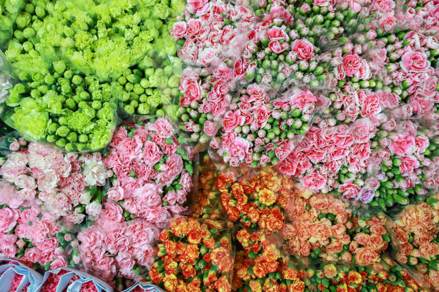 Yunnan Flowers