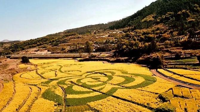 Rape-seed flower in Anning of Kunming