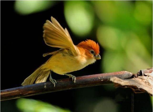 bird watching in Yingjiang