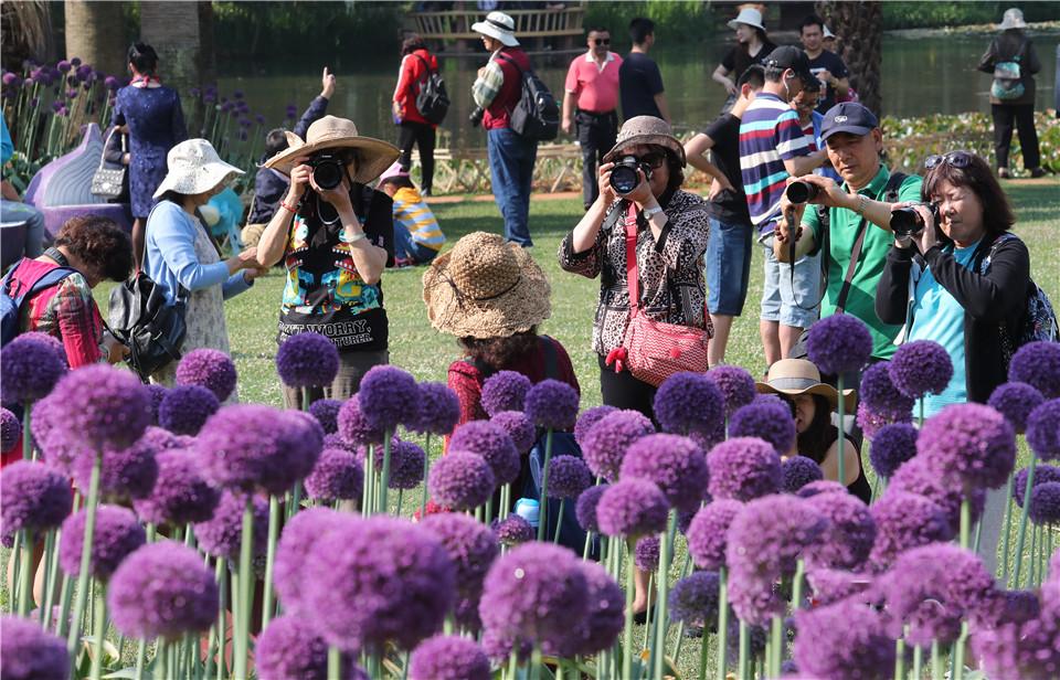 Blue globe onions in Kunming Botanical Garden
