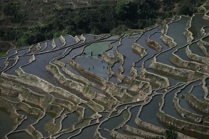 Samaba Rice Terraces in Honghe County, Honghe