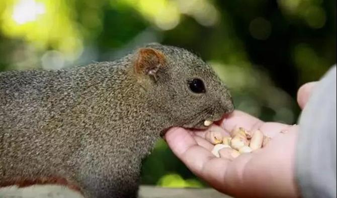 Squirrel in Yunnan University