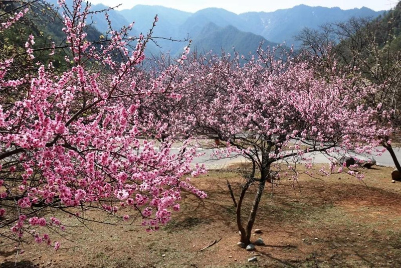 Weixi national park in Diqing