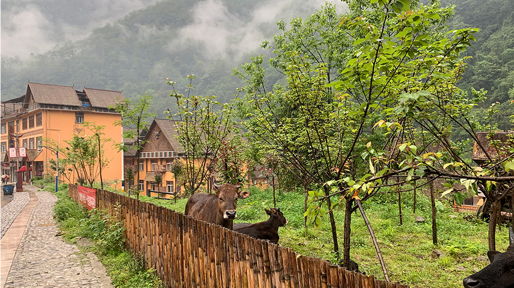 Newly-built houses in Kongdang Village, Dulongjiang Township, southwest China's Yunnan Province