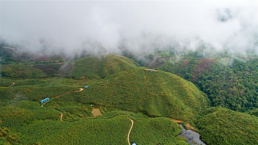 A bird's-eye view photo of tea gardens covered by clouds