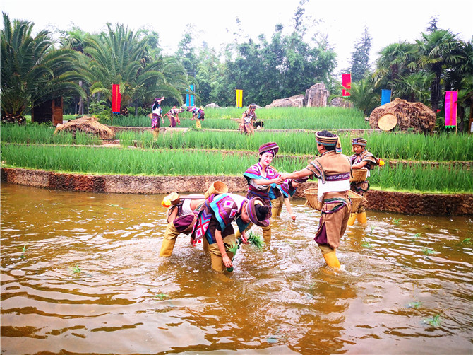 Women transplant rice seedlings