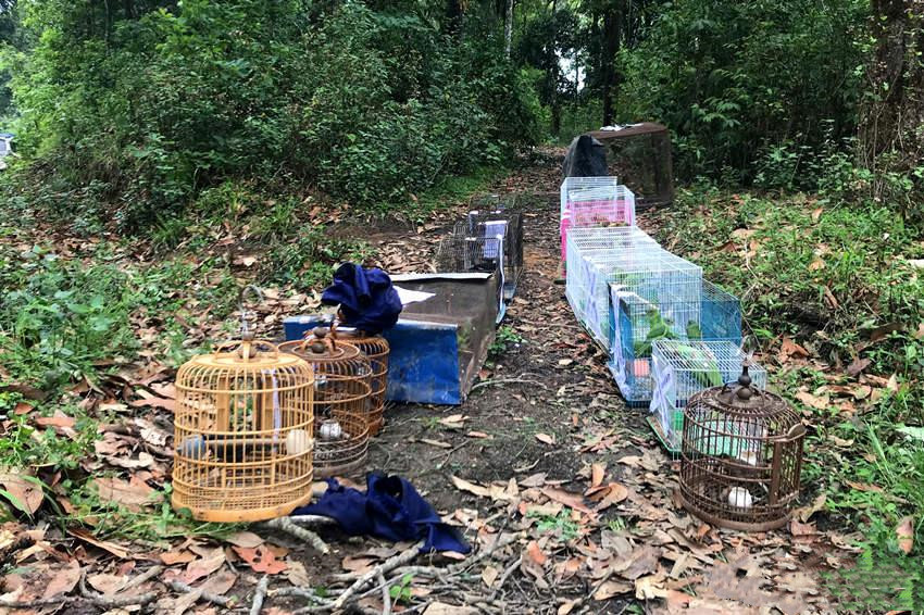 birds are setting free in Xishuangbanna