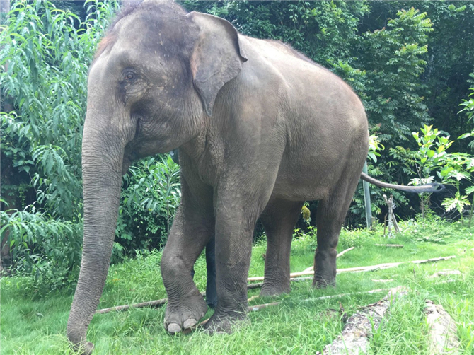 Ranran is a star at the Wild Elephant Valley in Xishuangbanna National Nature Reserve, Yunnan province