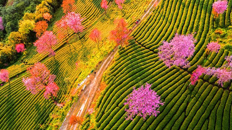 Flowers in Yunnan