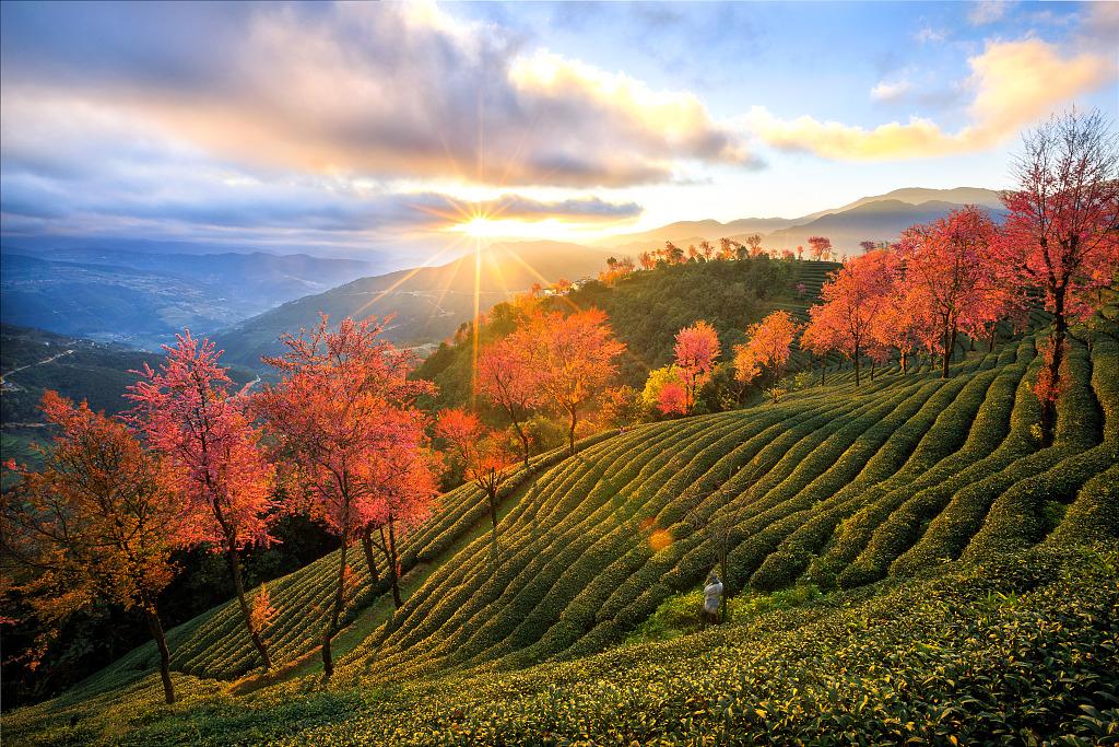 The autumn view of the Wuliangshan Sakura Valley in Nanjian County, Dali