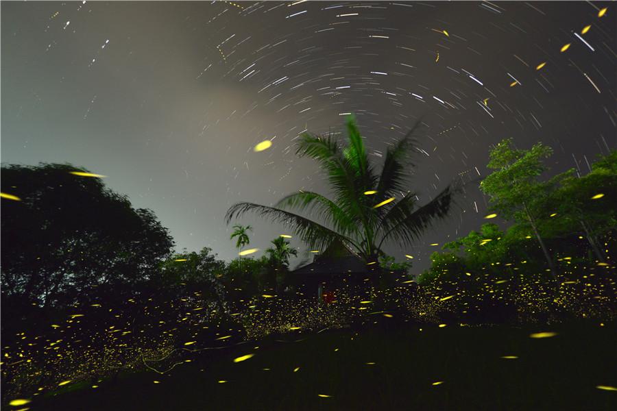 The sparkling firefly dances in the botanic garden in Xishuangbanna Dai autonomous prefecture in Yunnan