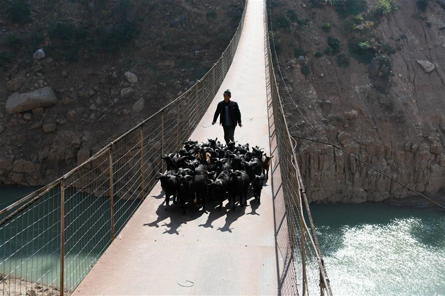 A man herds the sheep on a bridge spanning the Niulan River in southwest China on Dec. 12, 2019