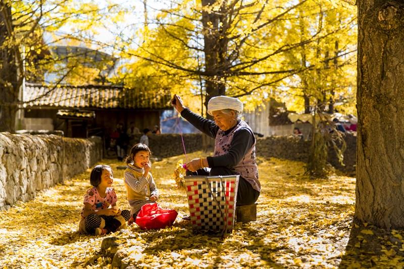 Gingko Village in Tengchong of Baoshan