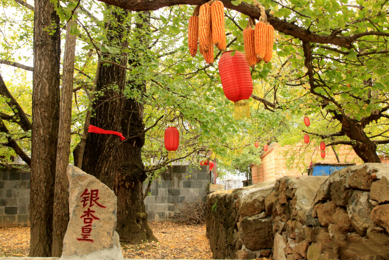 Ginkgo village in Tengchong City, Baoshan