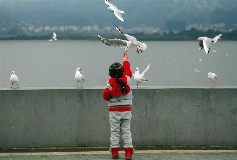 Seagulls in Kunming