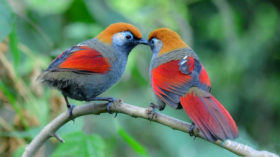 Bird-watching tour in Baoshan, Yunnan