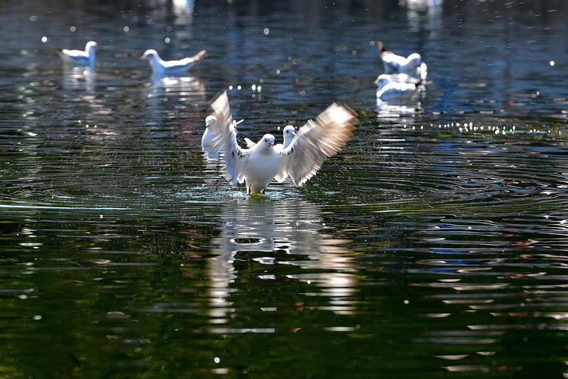 Green Lake Bird-Watching in Kunming