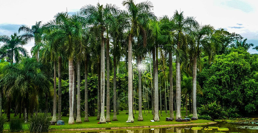tropical front backyard landscaping layout
