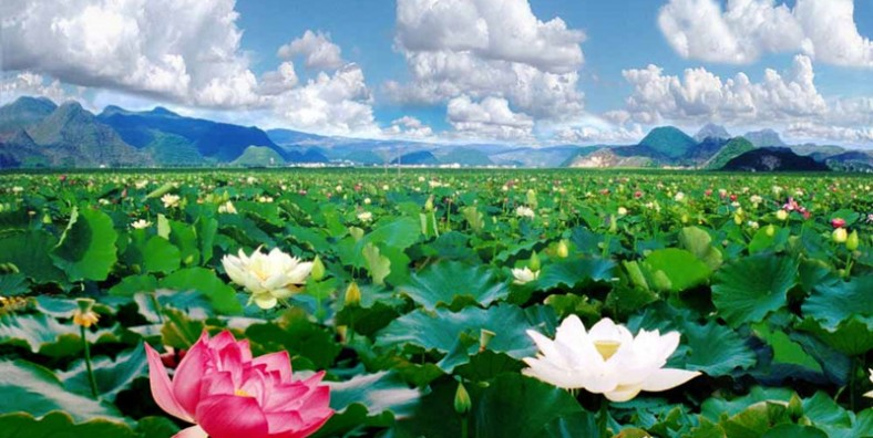 3 Days Puzhehei Lotus Flowers Tour and Bamei Xanadu Discovery By Speed Train(June,July,August)