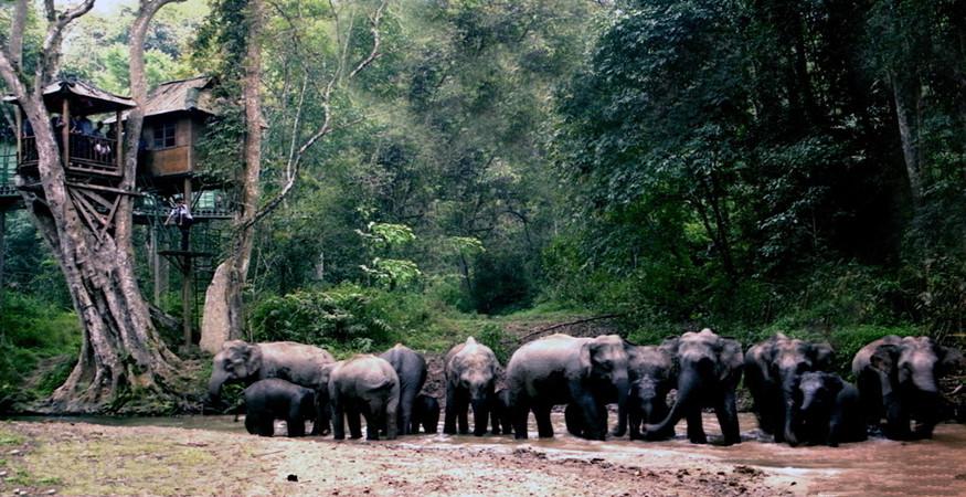 Wild Elephant Valley in Jinghong City, Xishuangbanna