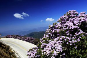 Jiaozi Snow Mountain in Kunming