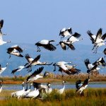 6 Days Northeast Yunnan Winter Birding Tour to Dianchi Lake, Nianhu Lake and Dashanbao