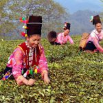 11 Days Yunnan Ancient Tea-Horse Road Tour with Puer and XishuangBanna Tea Culture Exploration
