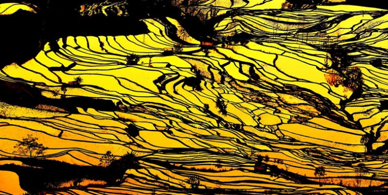 8 Days China Students Education Tour to Yuanyang Hani Rice Terraces
