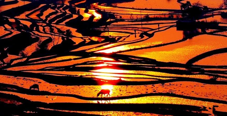 yuanyang-rice-terraces-honghe-13