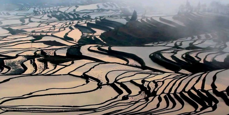 1 Day Yuanyang Hani Rice Terraces Tour