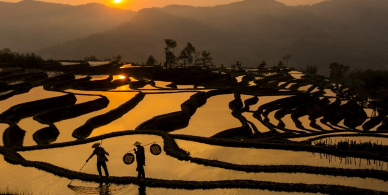 9 Days South China Rice Terraces and Ethnic Culture Tour to Yuanyang and Longji Rice Terraces
