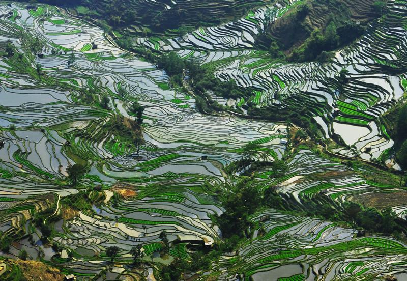 yuanyang-rice-terraces-honghe-34