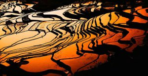 Yuanyang Rice Terraces in Honghe