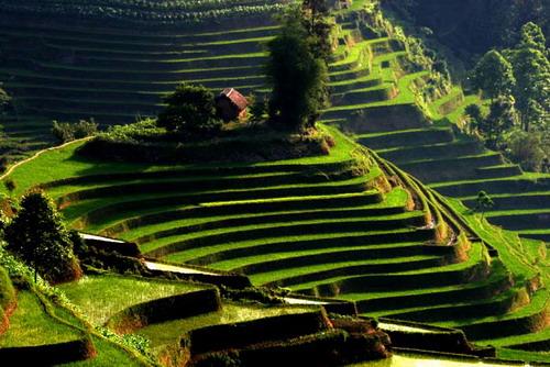 yuanyang-rice-terraces11